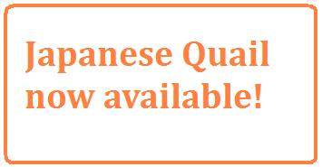 Japanese%20Quail%20available The Australian Bureau of Statistics report reveals that
